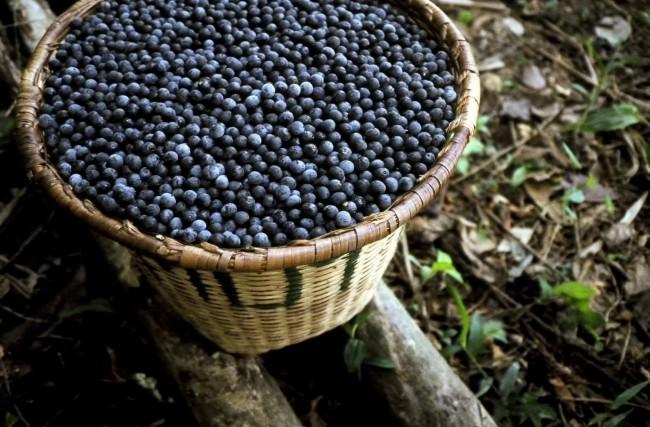 Açaí – Um dos alimentos mais ricos em antioxidantes